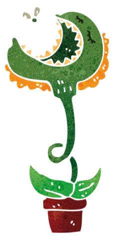 pianta-carnivora